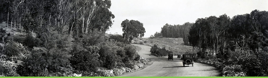 Main entrance into Palos Verdes Estates, California through the Eucalyptus Grove. Photo 5950-13-007a. Courtesy NPS, Frederick Law Olmsted National Historic Site.